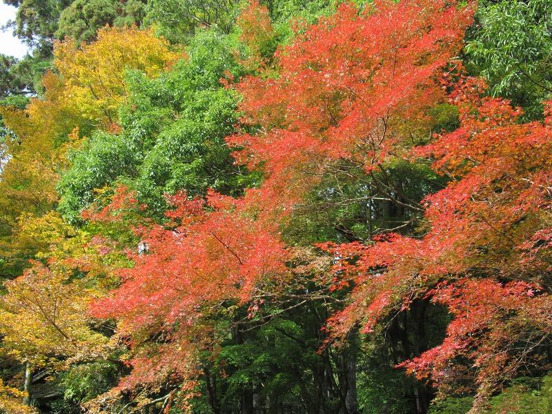 秋の紅葉ウォーク