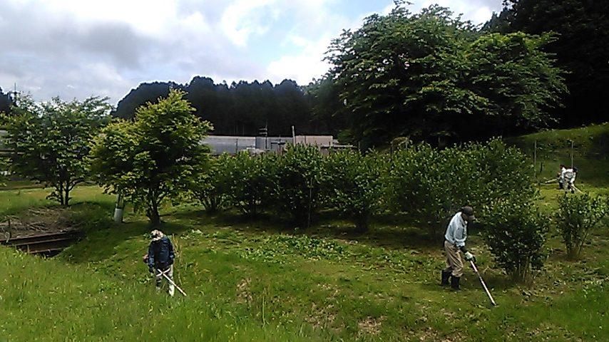 アロニア栽培地の草刈り実施